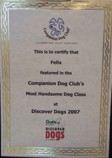 most handsome dog certifi