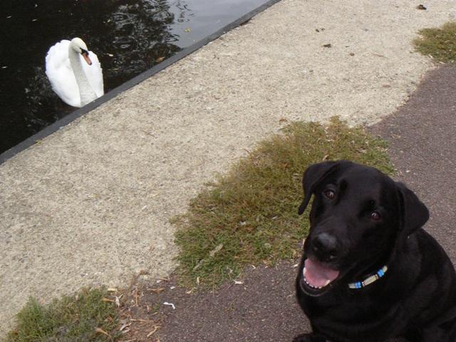 a swan & Felix