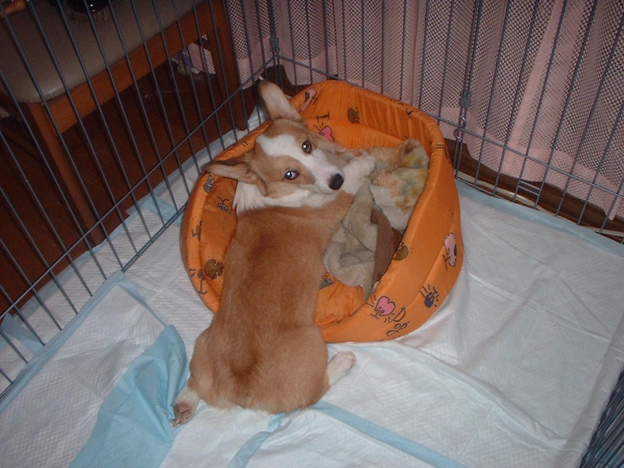 koemo bed2