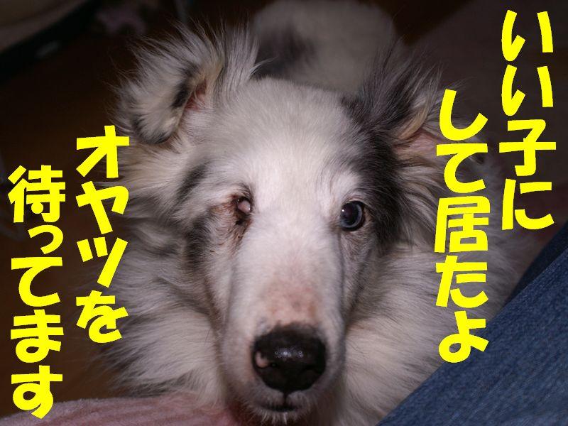 leo_oyatsu.jpg