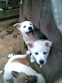保護 犬 市 浜松