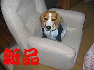 座椅子�.jpg