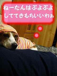 ハピコレ�.jpg