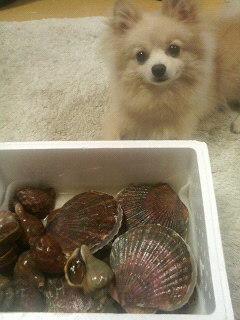 ほたて・つぶ貝