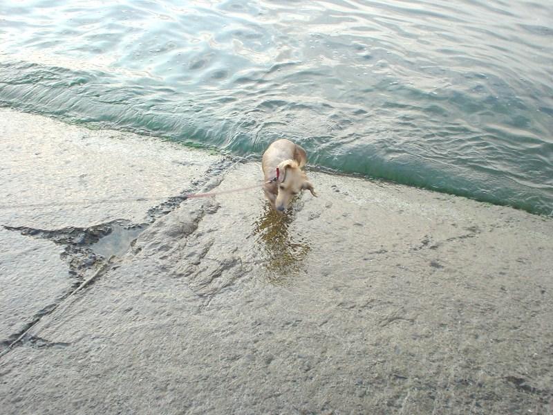 エル溺れる