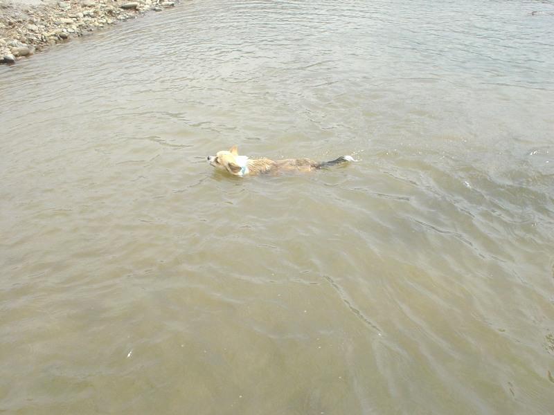 妊婦ぐりも泳ぎます