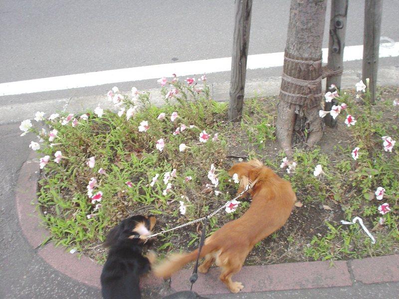 花壇をクンクン