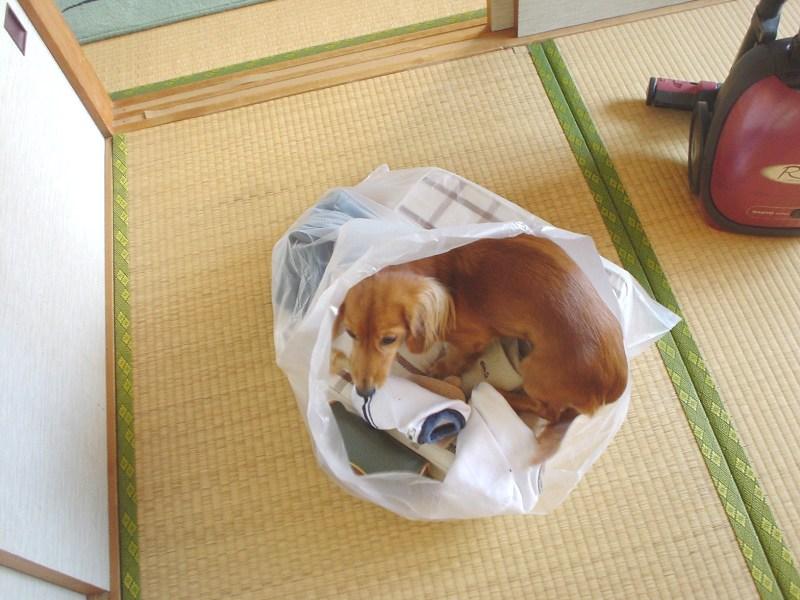 袋入り娘☆静華