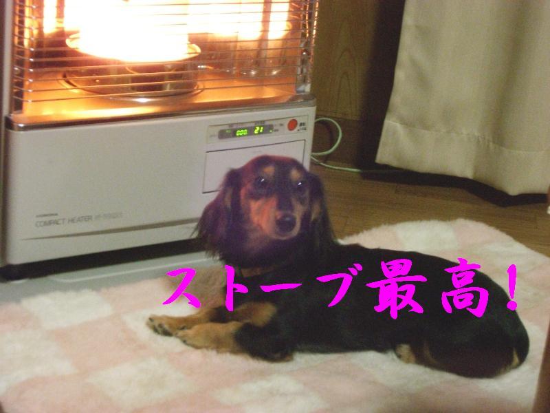 道産犬の冬