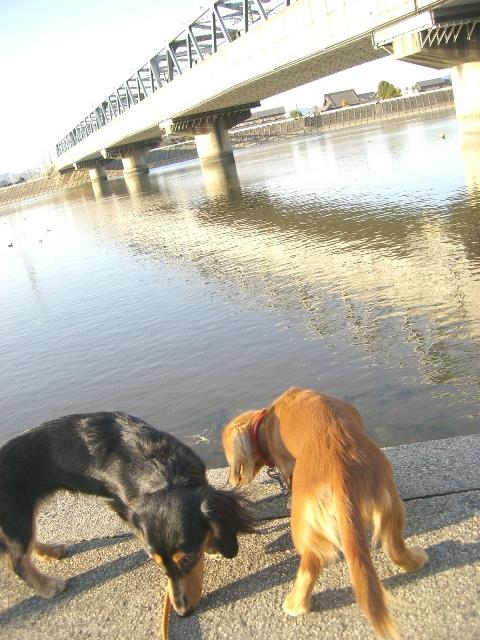 新幹線の橋と…