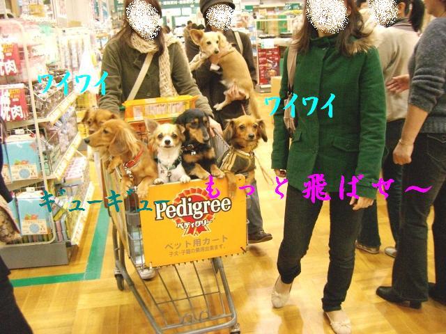 犬・箱詰めセット