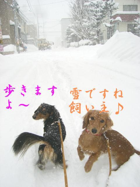 散歩行くよ〜
