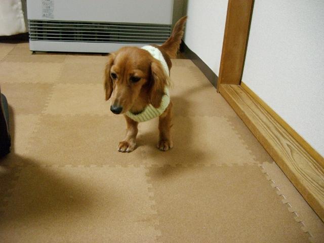 またセーターですか…