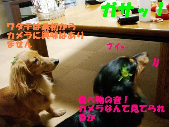 ハッ!食べ物の音!!!