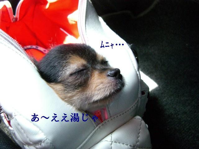 移動は眠いのぅ