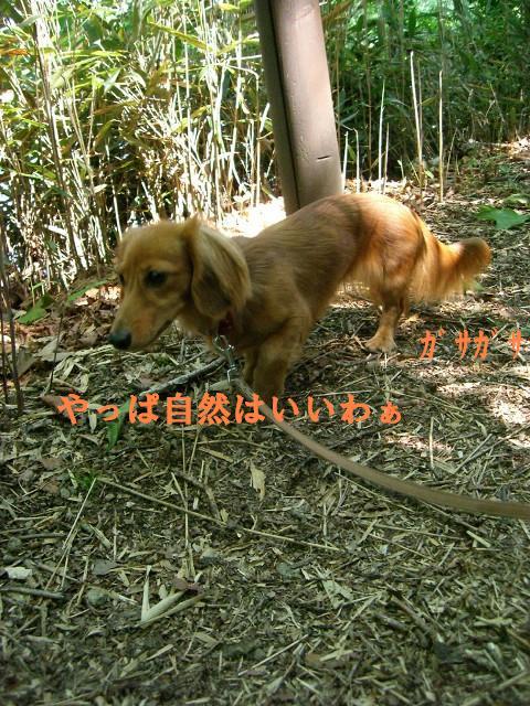 錦大沼公園ですぅ
