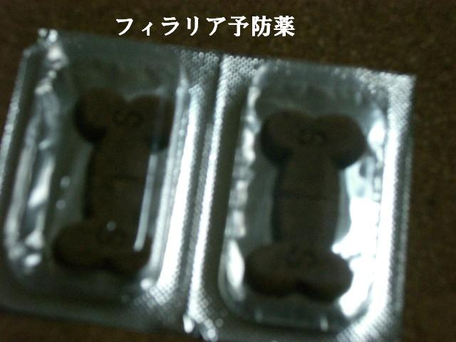 フィラリアの薬