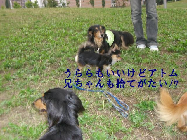 ある日の散歩〜