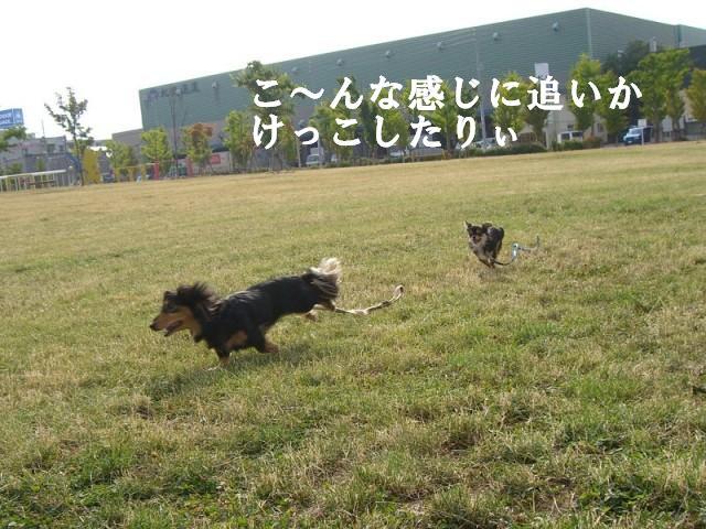 走るぞっ!