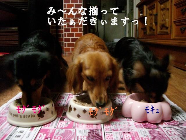 (・∀・)つ〜 クエ !!