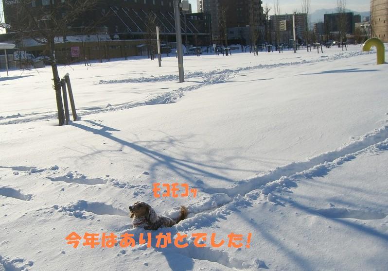 雪のプールだぃ!