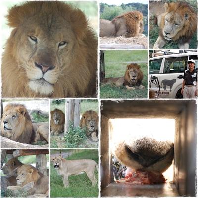 10月8日 ライオン