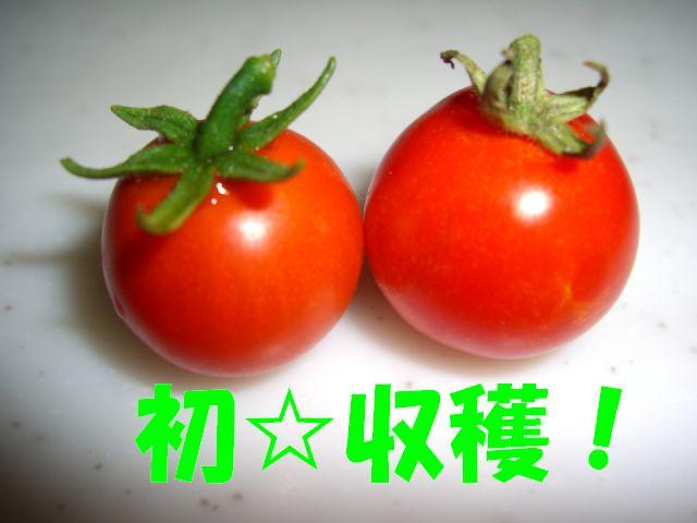 初収穫.jpg
