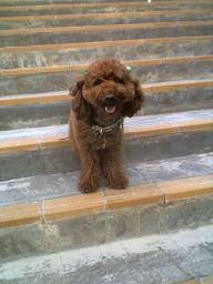 階段のカピ
