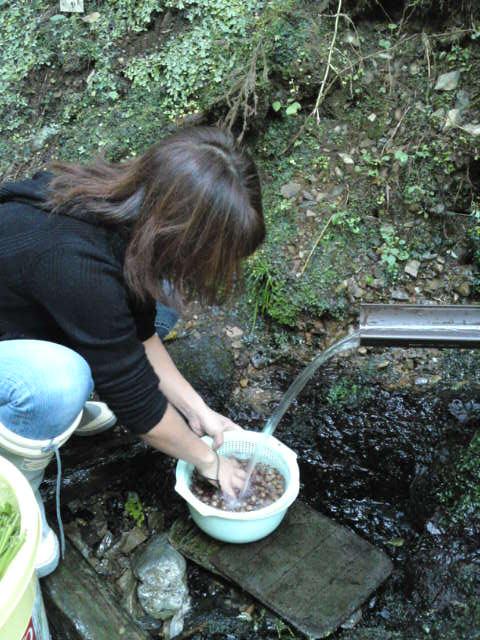 湧き水で洗います