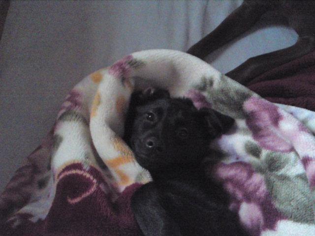 ハウル寝起き