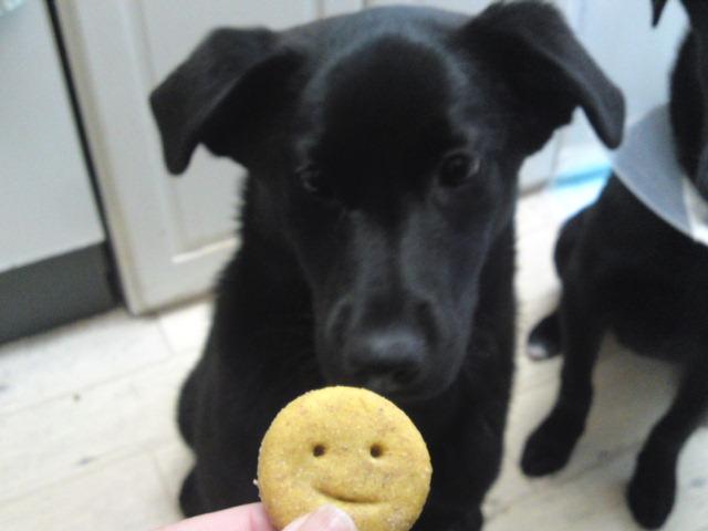アリスクッキー