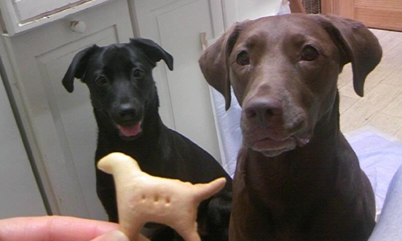 ワンコクッキー
