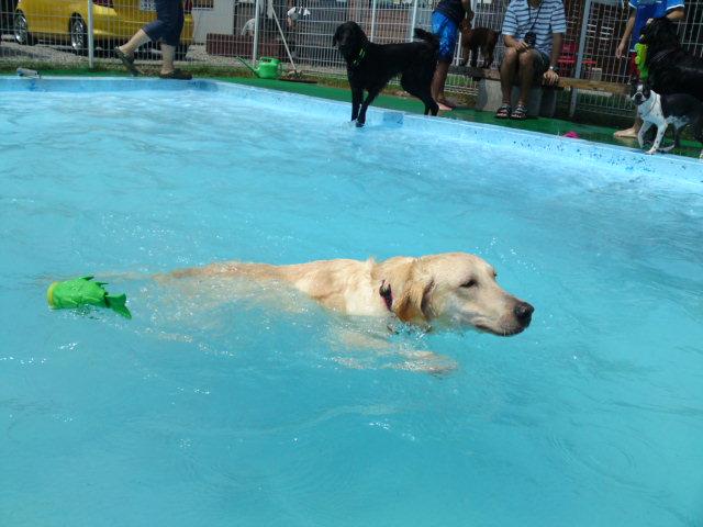 あらまー泳げたよ