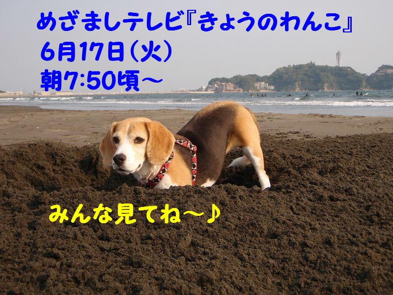 1213374880706259.jpg