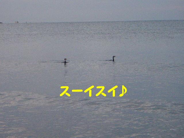 1233152849868530.jpg