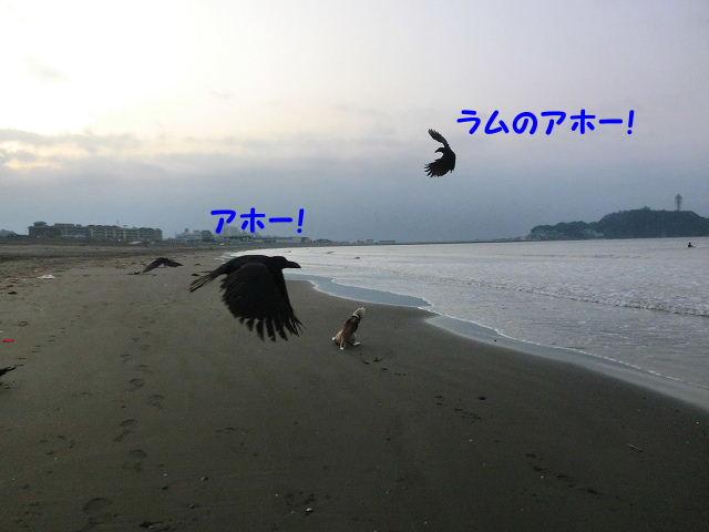1300194852209857.jpg