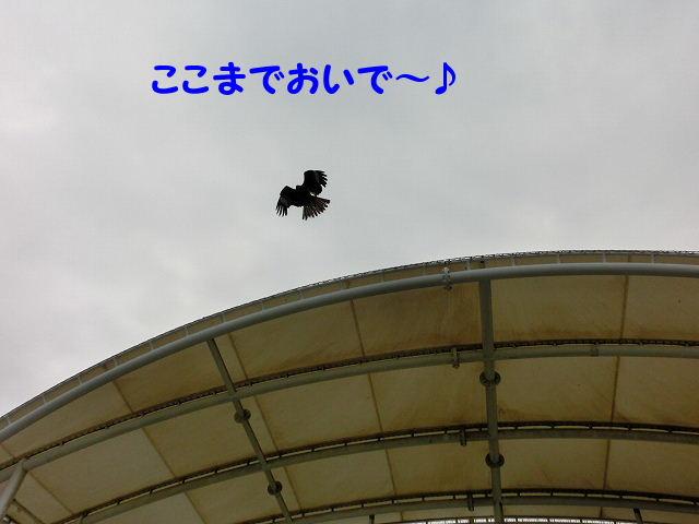 1371801759186224.jpg