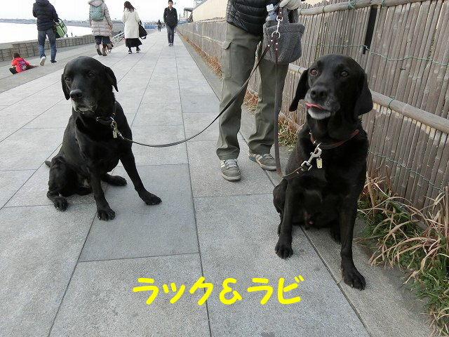 1485691938743688.jpg