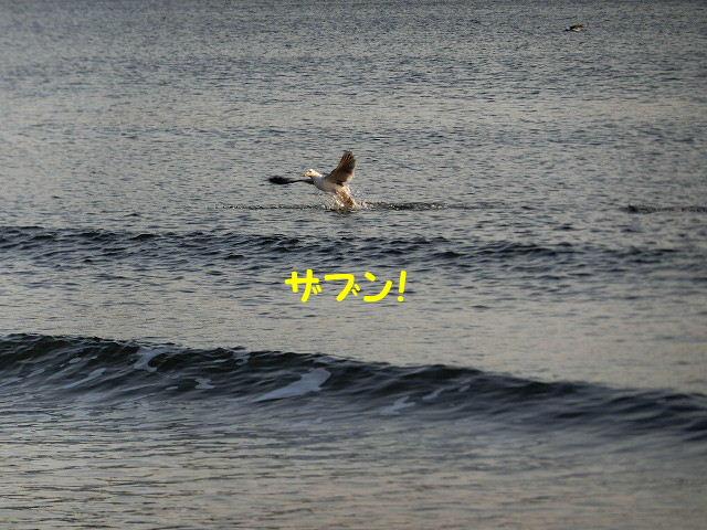 1519642162641324.jpg