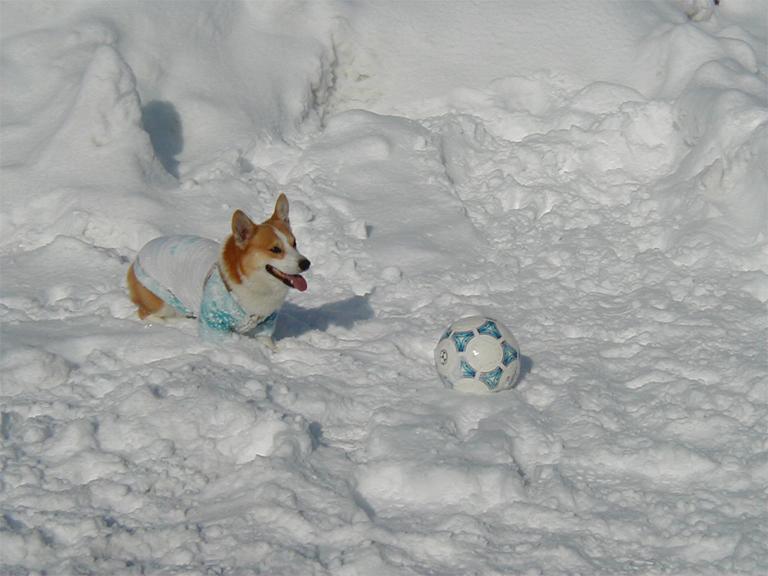 サッカー開始!