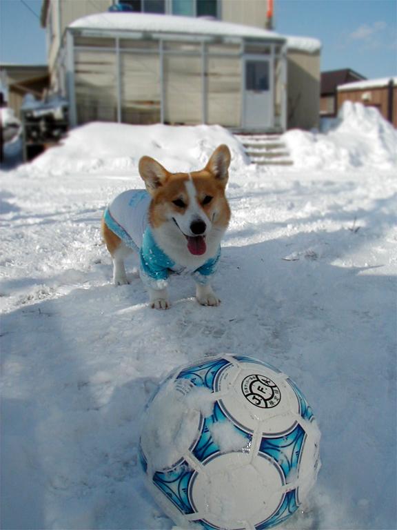 サッカーボールの方がメインになってない???