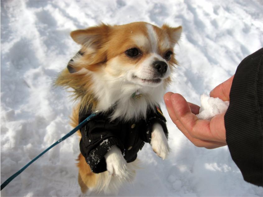 ミッキー君も雪遊び