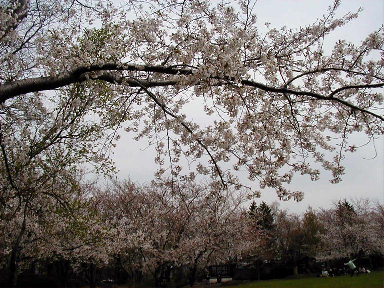 戸田墓地記念公園