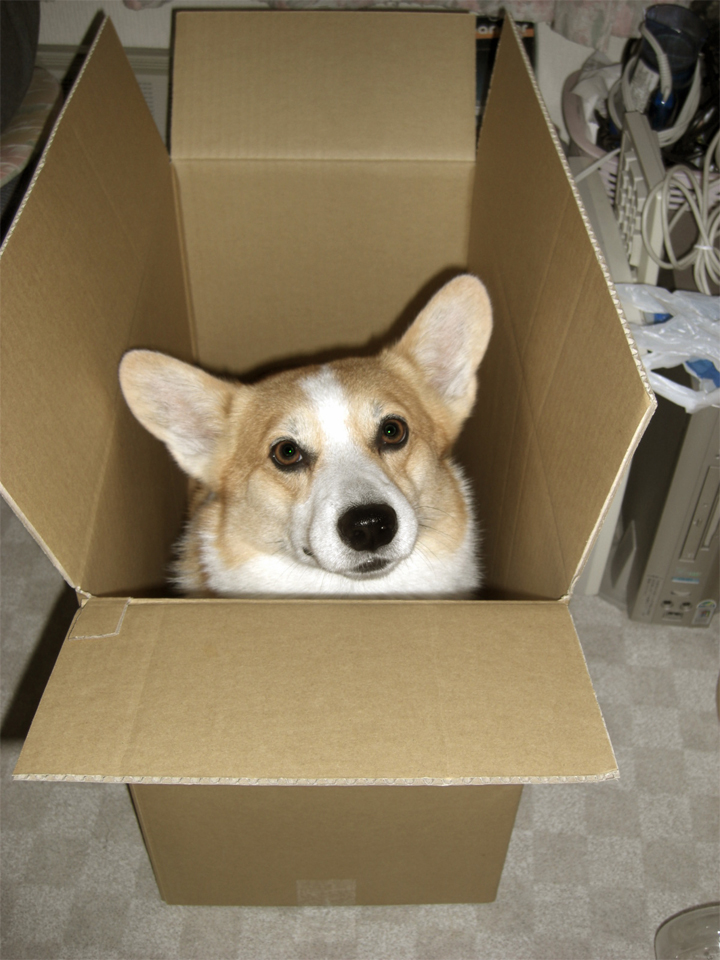 荷造りはさせません。