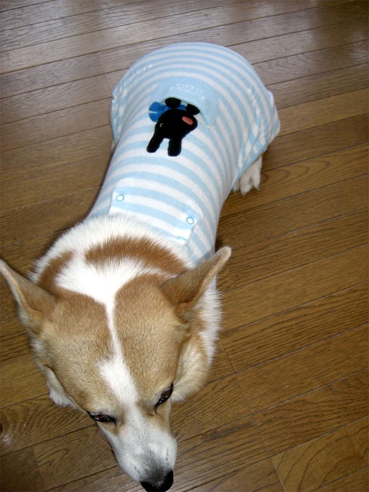 この服着たレオのお尻は…萌るよ。マジで。