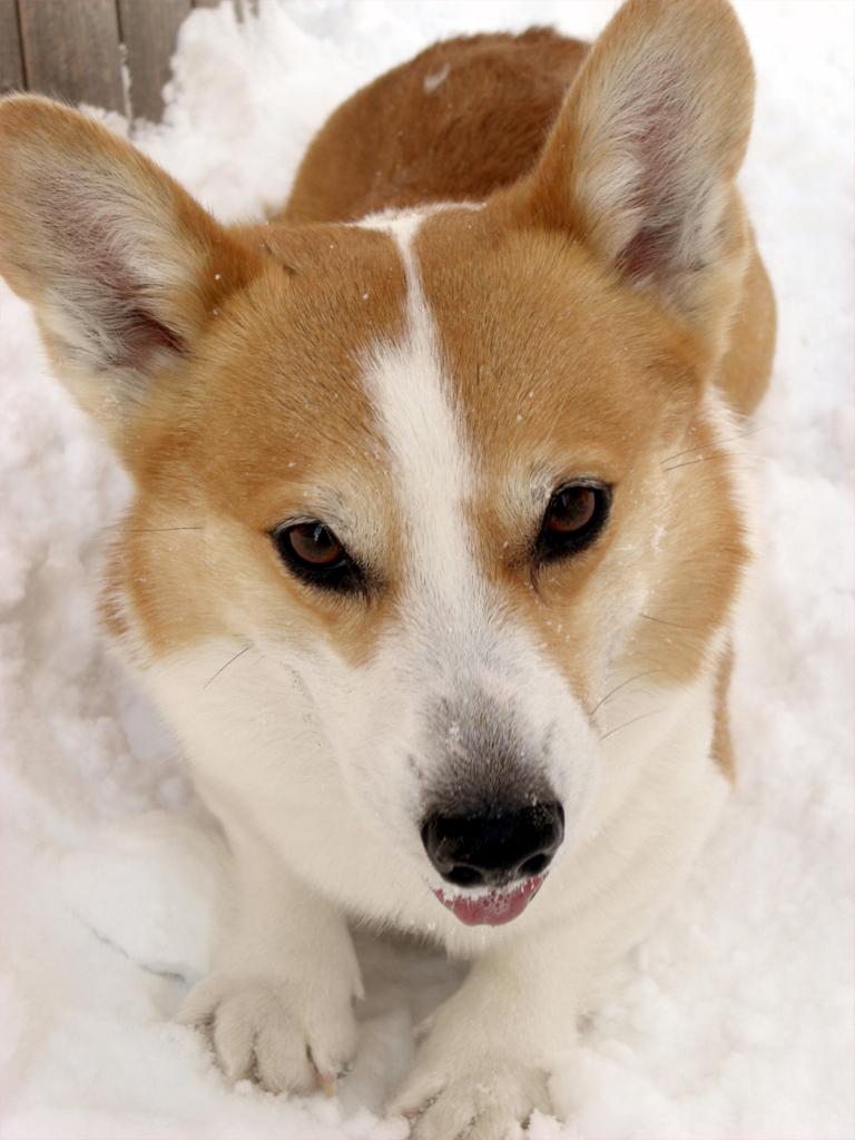 雪の中でもかっちょいいでしょ