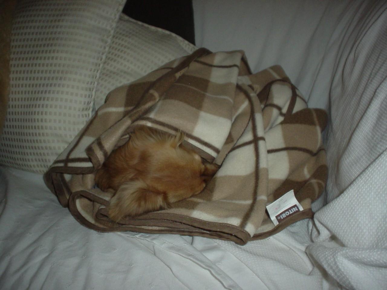 ソファの上で毛布にくるまってねんね.jpg