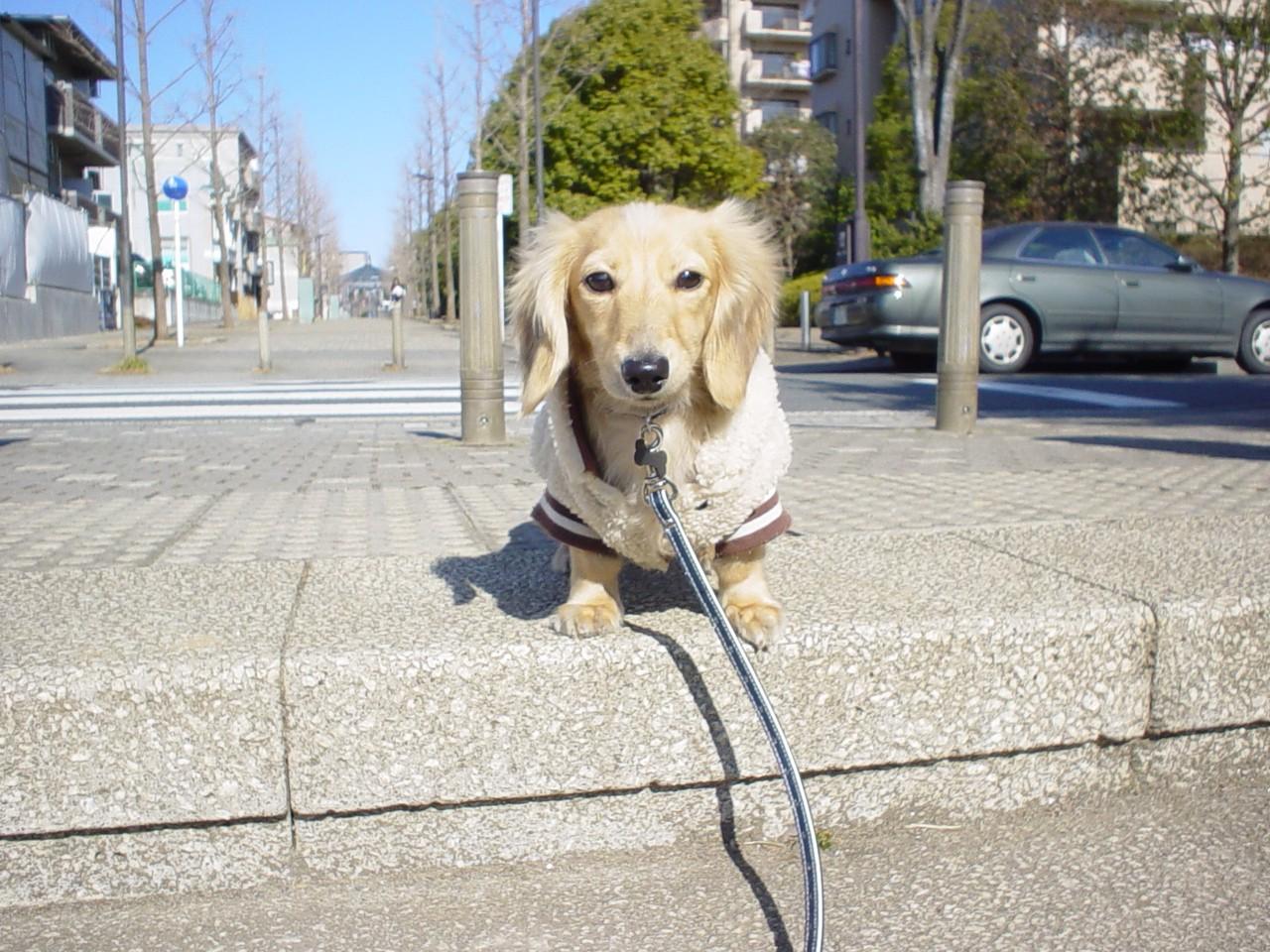 中川の公園の階段.jpg
