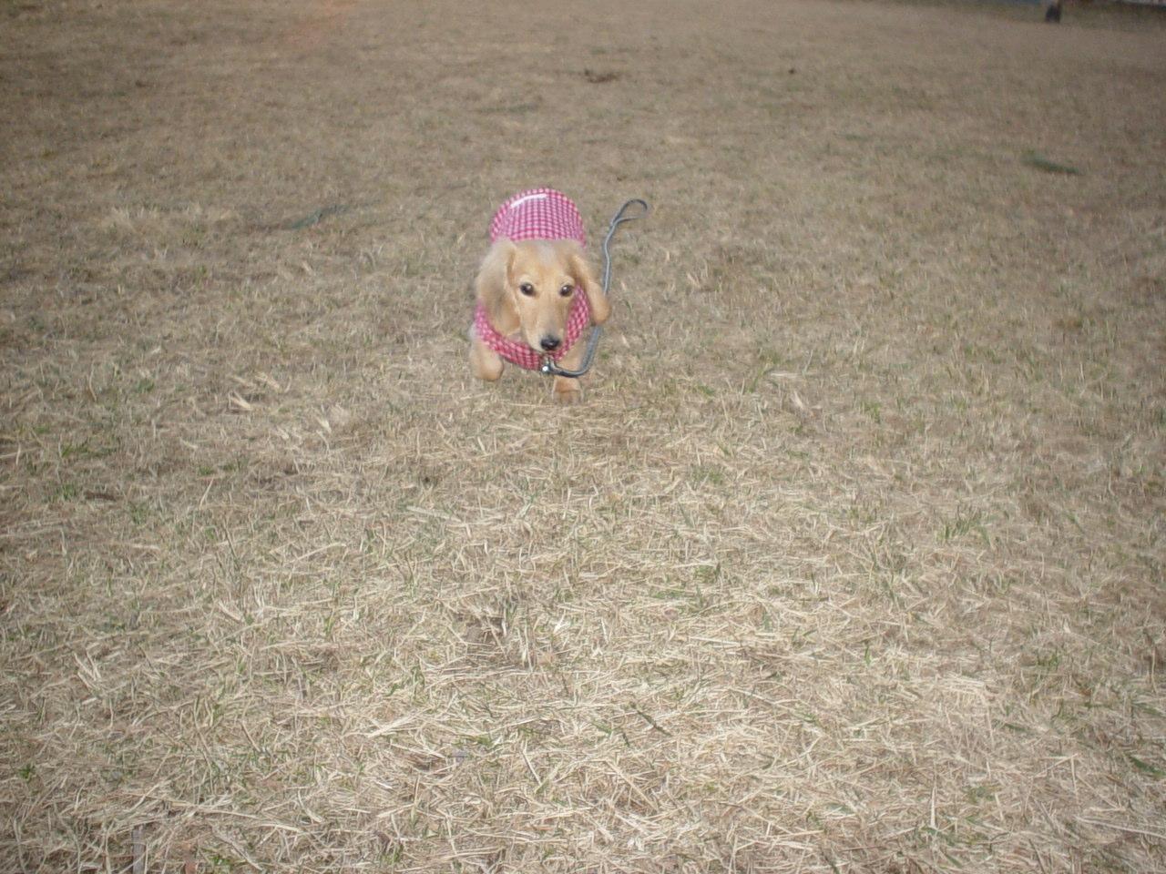三角公園.jpg