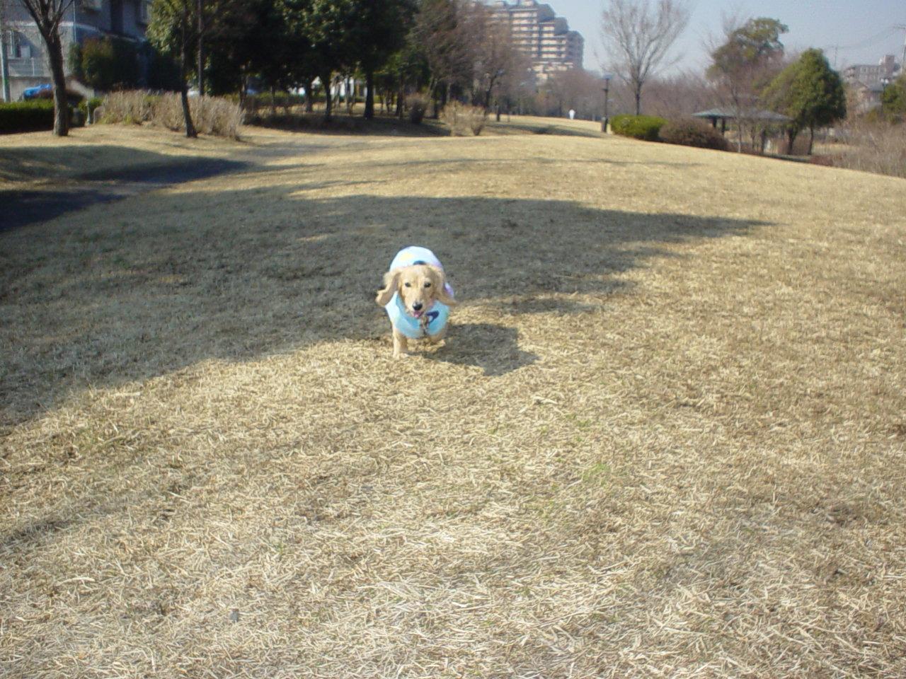山崎公園でダッシュ.jpg
